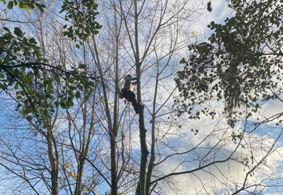 travaux élagage et démontage arbre